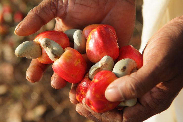 Organiser la filière anacarde pour mieux faire face aux problèmes que rencontre la chaîne de valeurs, tel est le principal objectif qui a motivé les travaux de réflexion des producteurs, acheteurs, exportateurs et transformateurs de la noix de cajou, ce samedi 21 avril 2018 à l'Hôtel Président de Yamoussoukro.