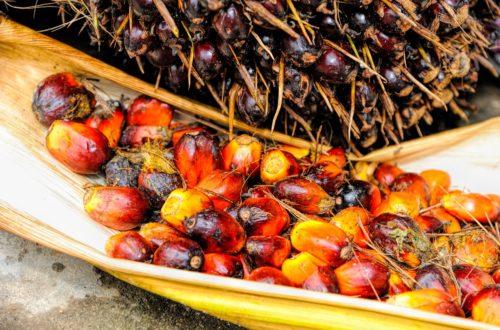Article : Durabilité de la filière palmier à huile, l'approche de Earthworm Foundation